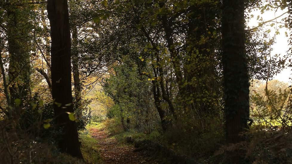 Natura 2000 gebieden in Gelderland - Open Data Gelderland | 550x978